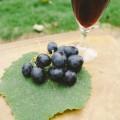 日本ワインにも格付けがある?おすすめのワイナリーもご紹介!