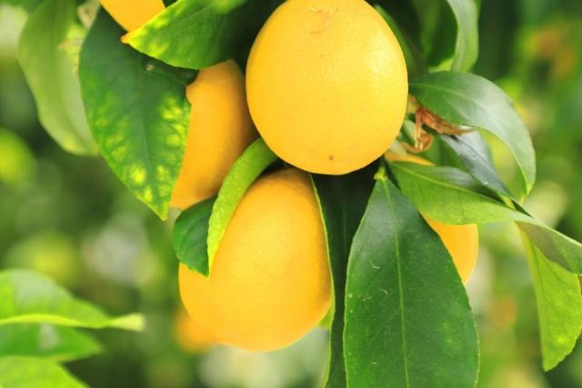 レモンサワーの作り方3